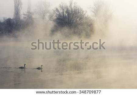 Cold winter morning by the river, with pair of swans. - stock photo