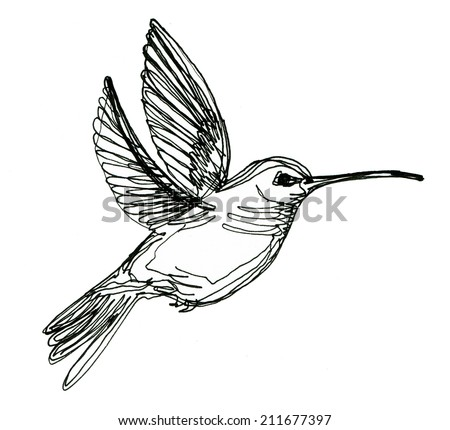 colibri drawing made in line art style - stock photo