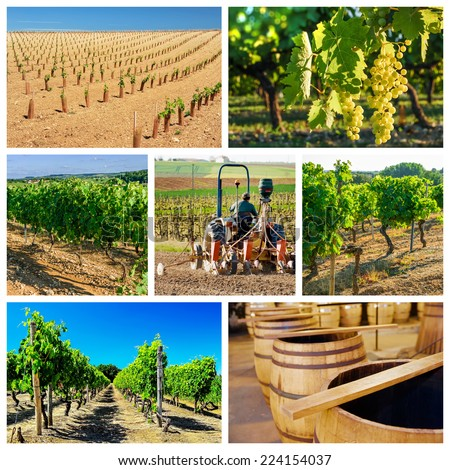 collage and composition about vineyard and wine industry - stock photo