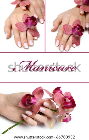 collage.Beautiful hand with perfect manicure and purple orchid flower group photo. isolated on white background - stock photo
