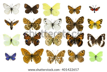 collage butterfly - stock photo