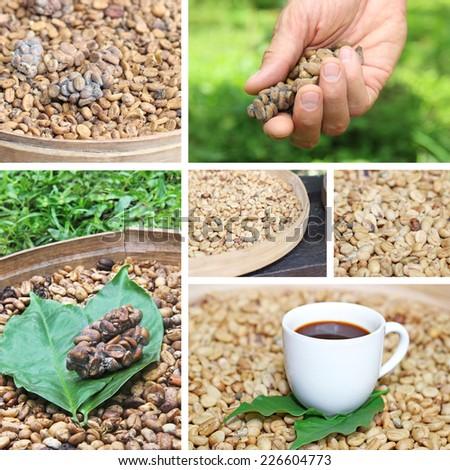 collage coffee luwak coffee beans luwak - stock photo