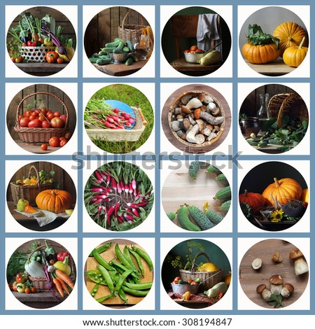 Collage from still lifes with vegetables and mushrooms. Food.Mushrooms. - stock photo