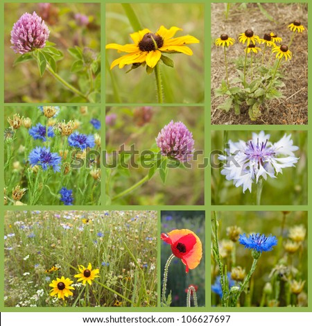 Collage full of wild flowers - stock photo