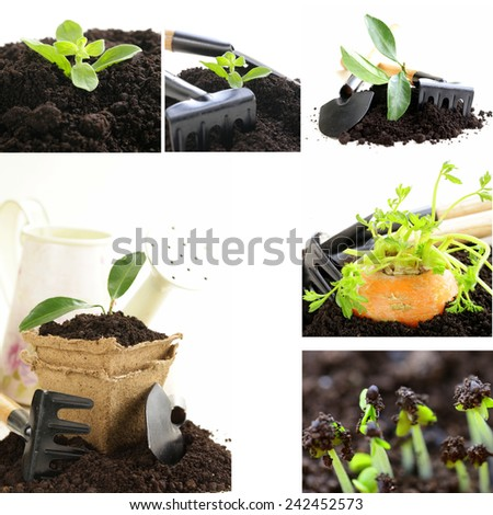 collage gardening  ground with garden tools on a white background - stock photo