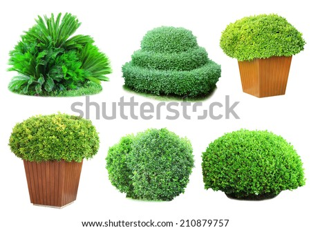 Collage green bushes isolated on white - stock photo