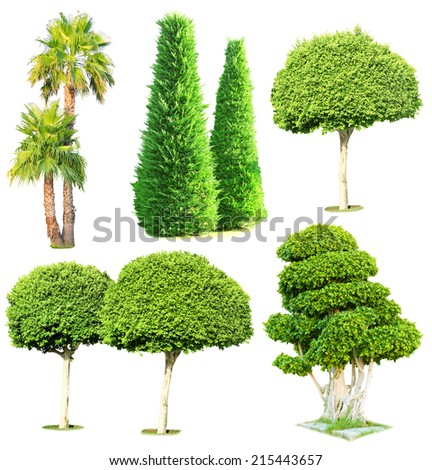 Collage green trees isolated on white - stock photo
