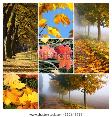 Collage made with autumn related images - stock photo