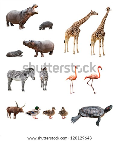 Collage of african animals in front of white background - stock photo