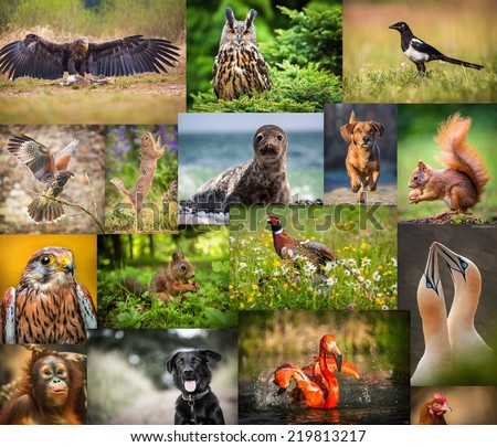 collage of animals - stock photo