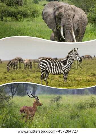 Collage of Animals from Tanzania - travel background (my photos) - stock photo