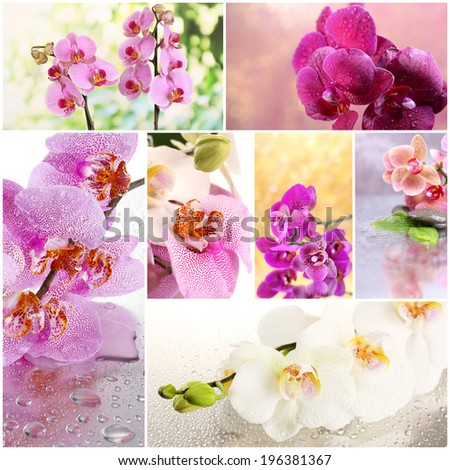 Collage of beautiful orchids - stock photo