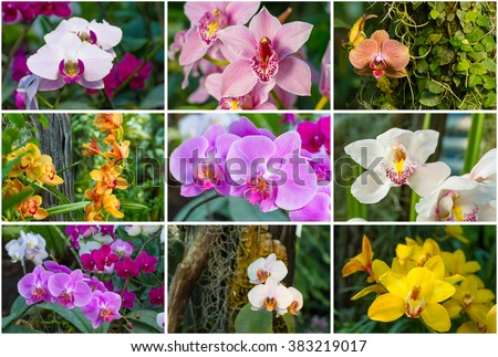 Collage of bright beautiful orchids. Collection of orchids. - stock photo