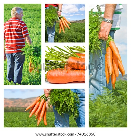 Collage of carrot farmer on his farm - stock photo