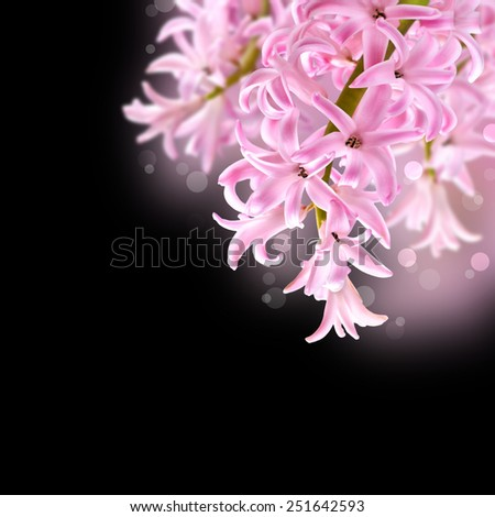 Collage of colors pink hyacinth on a black background - stock photo