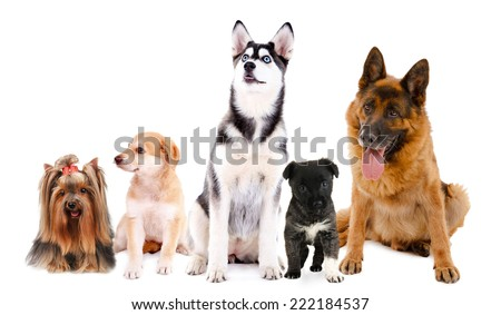 Collage of cute dogs isolated on white - stock photo