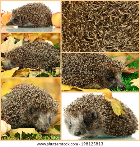 Collage of cute hedgehog - stock photo