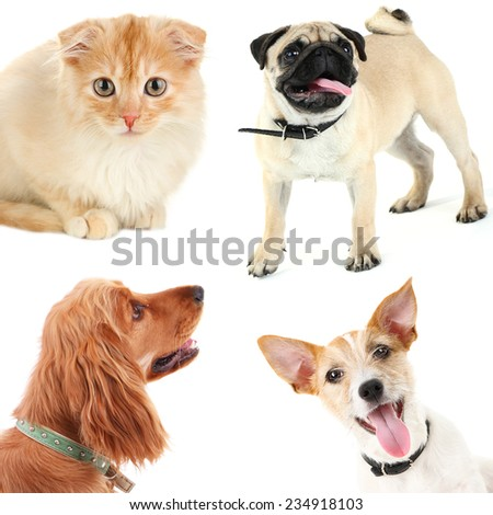 Collage of cute pets isolated on white - stock photo