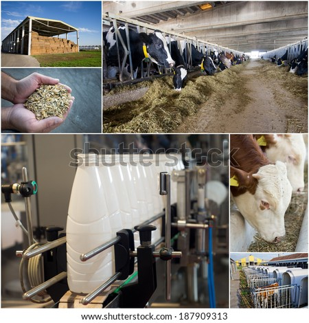 Collage of dairy industry process from feeding till packaging - stock photo