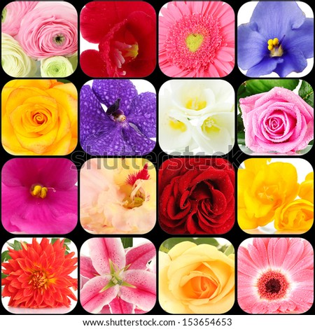 Collage of different beautiful flowers - stock photo