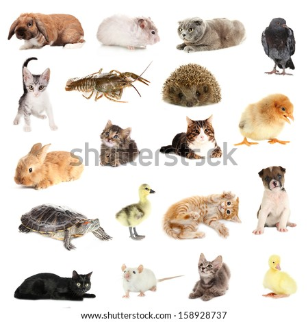 Collage of different cute animals - stock photo