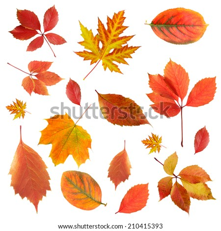 Collage of different leaves isolated on white - stock photo