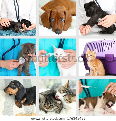 Collage of different pets at vet - stock photo