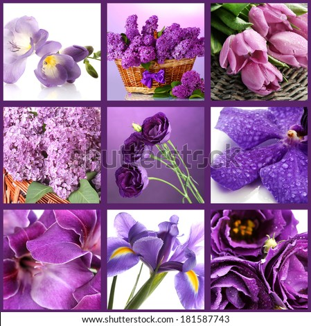 Collage of different purple flowers - stock photo