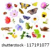 Collage of flowers, insects and animals. white - stock photo