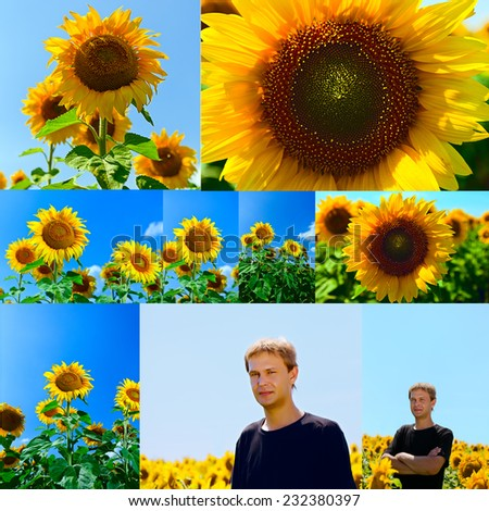 collage of flowers of sunflower and young man in the field against the blue sky - stock photo