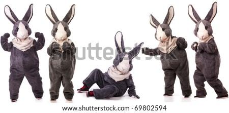 Collage of funny grey rabbits isolated on white background - stock photo