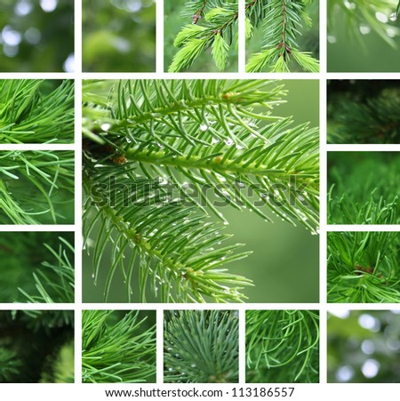 Collage of green coniferous tree with rain droplets - stock photo