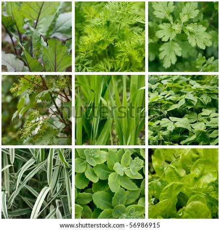 collage of green leaves in garden related pictures made from nine images - stock photo