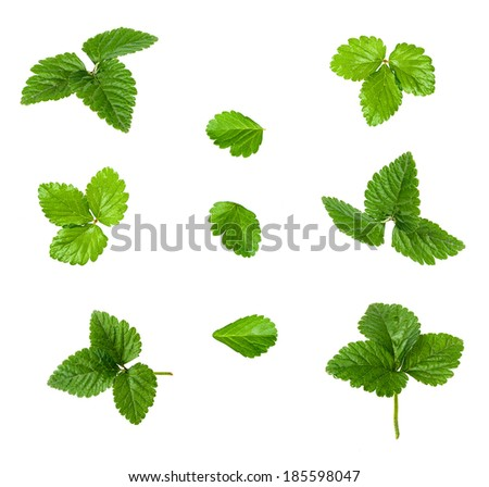 collage of green strawberry leaves on white background - stock photo