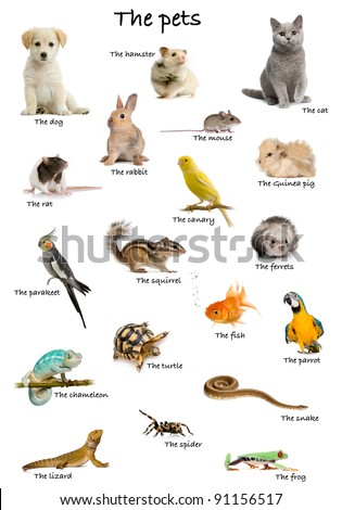 Collage of pets and animals in English in front of white background, studio shot - stock photo