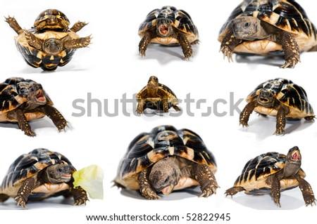 collage of photos of tortoise - stock photo