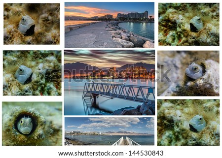 Collage of pictures made at the beaches of Eilat - famous resort and recreation city in Israel - stock photo