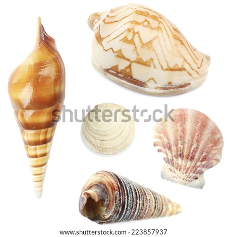 Collage of shells isolated on white - stock photo
