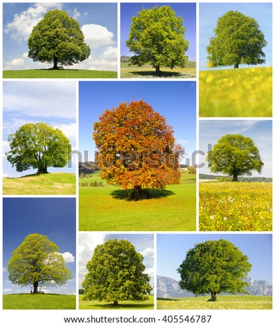 Collage of single big trees in meadow at spring and summer - stock photo