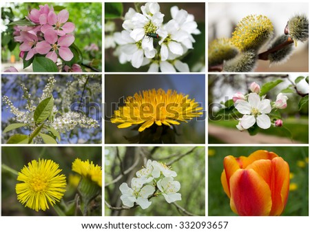 Collage of spring flowers - stock photo