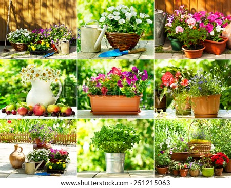 collage of summer flowers in a garden - stock photo