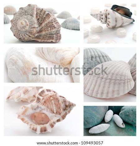 Collage of summer seashells - stock photo