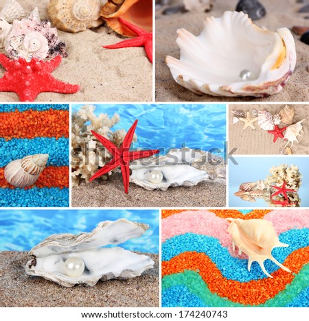 Collage of summer seashells - stock photo