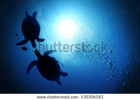 Collage of underwater world with sea turtle family swimming in the depth - stock photo
