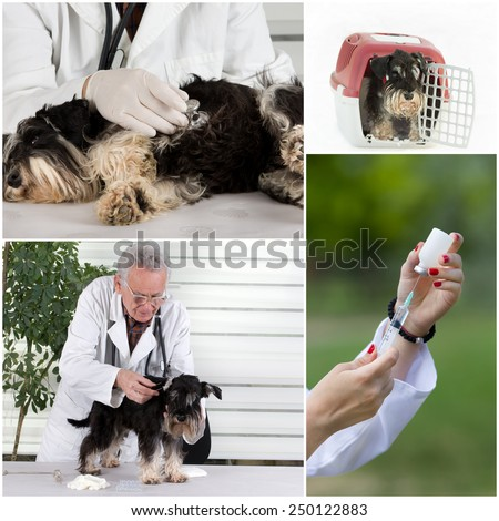 Collage of veterinarian and pet images in veterinarian ambulance - stock photo