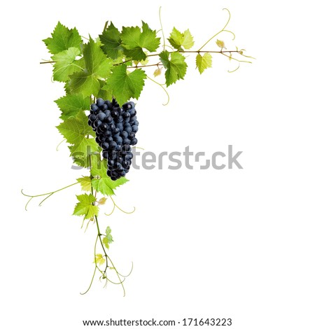 Collage of vine leaves and blue grapes on white background - stock photo