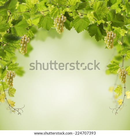 Collage of vine leaves and yellow grapes - stock photo