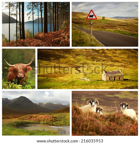Collage showing different landscape and animals from Scotland, UK - stock photo