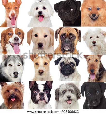 Collage with many dogs isolated on a white background - stock photo