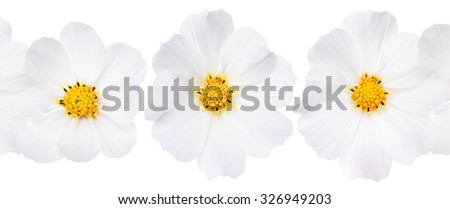 Collage with white flowers isolated. - stock photo